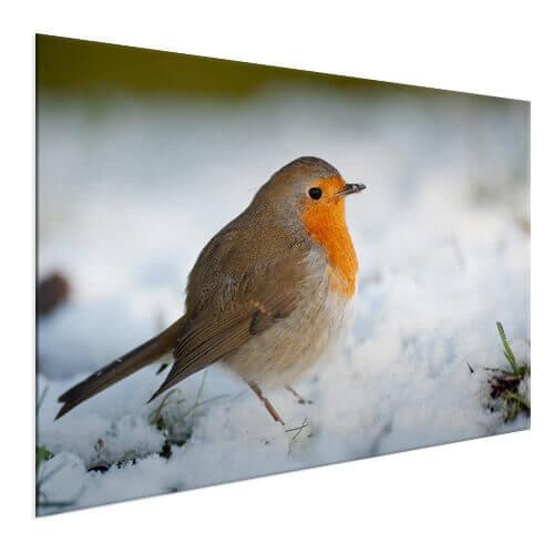 Fotograaf foto vogel afgedrukt op aluminium